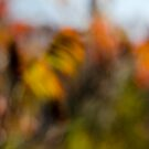 Autumn Sumac by Lynn Wiles