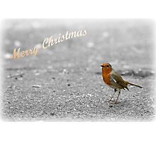 Robin Christmas card Photographic Print
