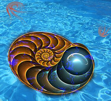 Ammonite (Nautilus) by 4Flexiway