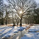 New Forest snow by Andrew Duke