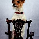 Dog on a chair by Paul Holman