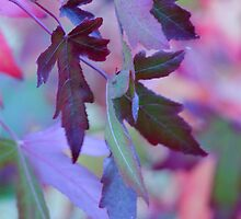 Rainbow Leaves by Patsy Smiles