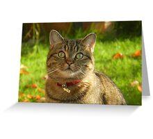 Autumn sunshine on Boris Greeting Card