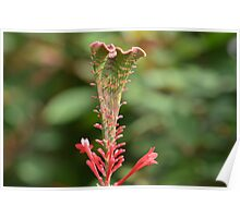 Red and Green Tropical Flower Poster