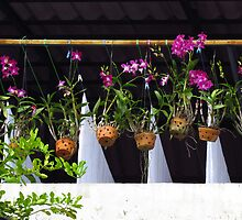 Vientiane - Orchids and washing by Maureen Keogh