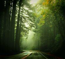 Driving Through Fog by Barbara  Brown
