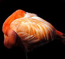 Shy Flamingo by Robin Lee