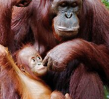 Youngster & Mum by Adam Martin