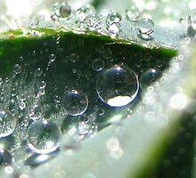 DewDrops by Alila Hofmeyr