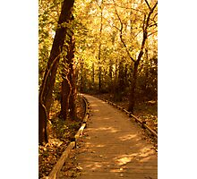 Golden Hours Along a Forest Path Photographic Print