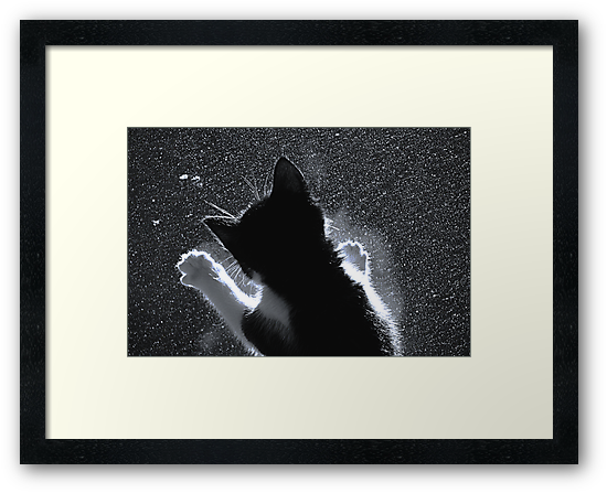 Kitten Chasing Snowflakes by simpsonvisuals
