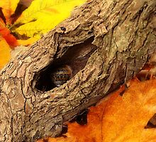 A Snail's Autumn House by Harry Purves