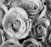 Bouquet of Roses with Water Drops in Black and White by Bo Insogna