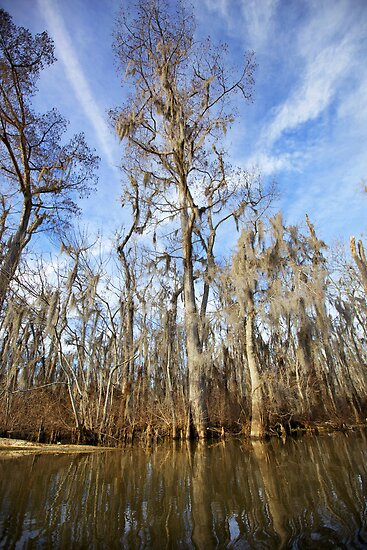 The Bayou - Louisiana  by mattnnat