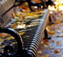 Benches by KerrieLynnPhoto