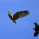 Owl Chased by Crows by DARRIN ALDRIDGE