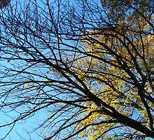 Branches by dge357