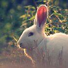 The White Rabbit by Rachele Totaro