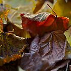 5 ★★★★★ . Fabulous , just wonderful and fabulous ! I do LOVE you AUTUMN . by Brown Sugar . Views (144) favorited by (3) thank you ! by © Andrzej Goszcz,M.D. Ph.D