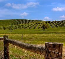 Nepenthe Vineyards - Hahndorf - Balhannah, The Adelaide Hills, SA by Mark Richards