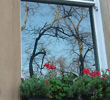 Reflected Trees With Geraniums by Fara