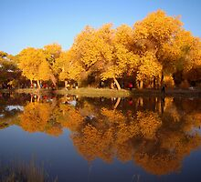 Reflection of Golden Poplar Trees in a Lake by Qing Yang
