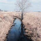 Farm creek color by purplefoxphoto