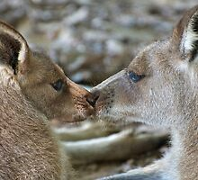 A kiss for Mum by Renee Hubbard Fine Art Photography