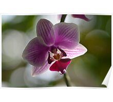 One Beautiful Orchid Poster