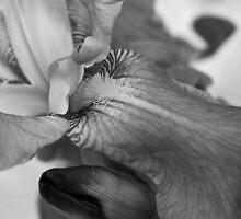 subdued iris by dedmanshootn