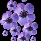 Anemones iphone case. by Gillian Cross