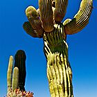 Giant Saguaro Cactus - Sonora, Mexico  by Jessica Karran