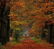 Riding in autumnal splendour by jchanders