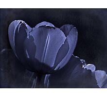 Misty blue fantasy tulip Photographic Print