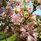 Blossom tree by Zoe Toseland