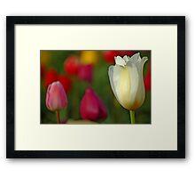 Tulipscape Framed Print