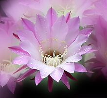 Pink Cactus Flower in the Rain #2 by Carole-Anne