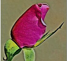 Pink Bud by Chet  King