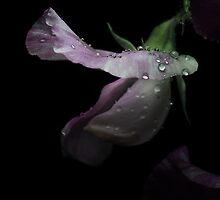 Sweet Pea with rain Drops by EbyArts