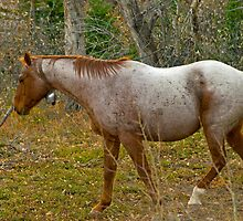 Roan Bell Horse in Autumn Forest by Donna Ridgway by Donna Ridgway