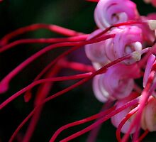 Grevillea at Elmore by Lozzar Flowers & Art