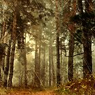 Forest Memories - Vintage Grunge by Romanovna Fine Art Prints