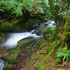 Cement Creek. Yarra Ranges NP by Bette Devine