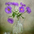 Michaelmas daisies by Mandy Disher