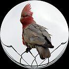 BIRD ON A WIRE by Rocksygal52
