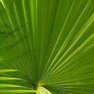 Fan palm 3 by abbycat