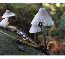 Bonnet Bell Cap Photographic Print