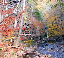 Beaverdam Creek by Annlynn Ward