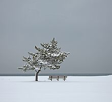 Lonesome Winter by Karol Livote