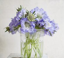 Bonne Maman Jar with Scabious by Fiona Sami
